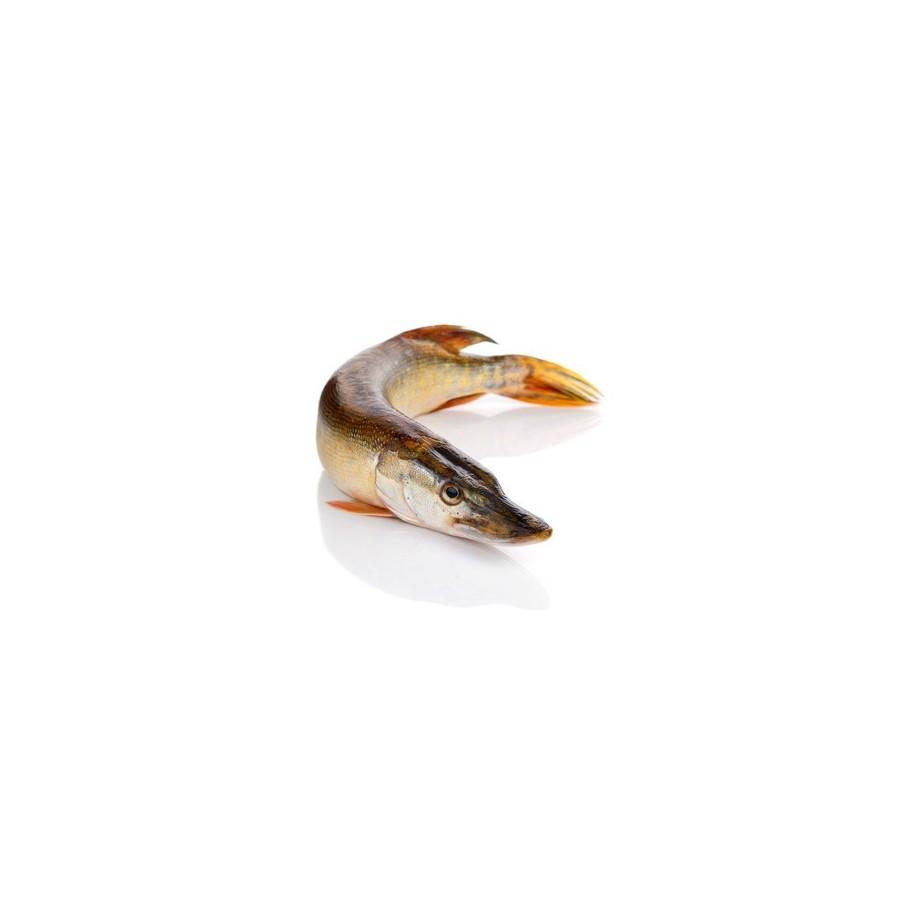 Brochet vidé pièce de 1,2 kg -poisson frais