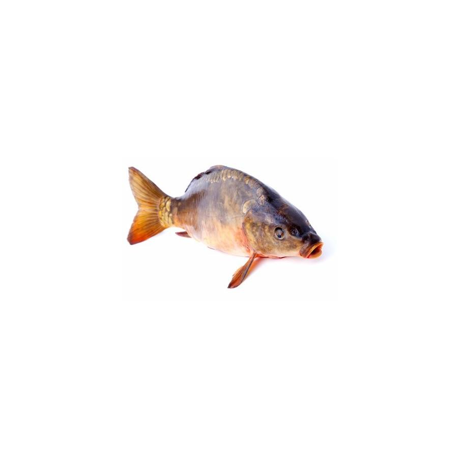 Carpe vidée la pièce 1,3 kg-poisson d'eau douce