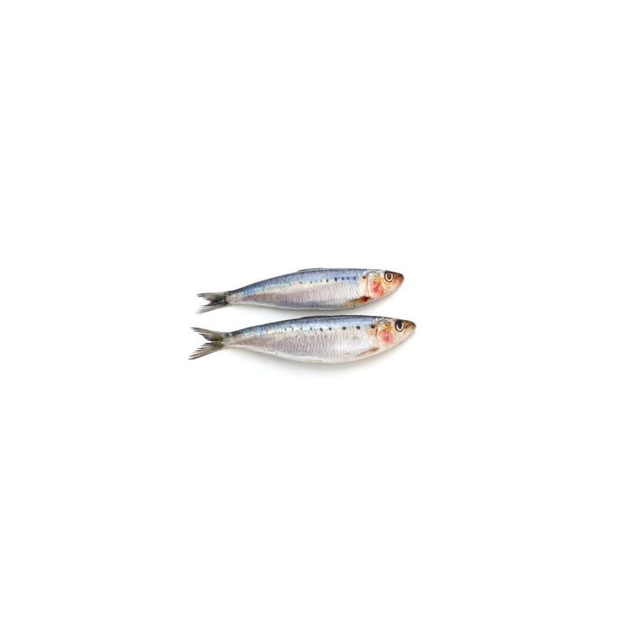 Sardine Atlantique Entière lot de 2 kg (Sardina pilchardus)