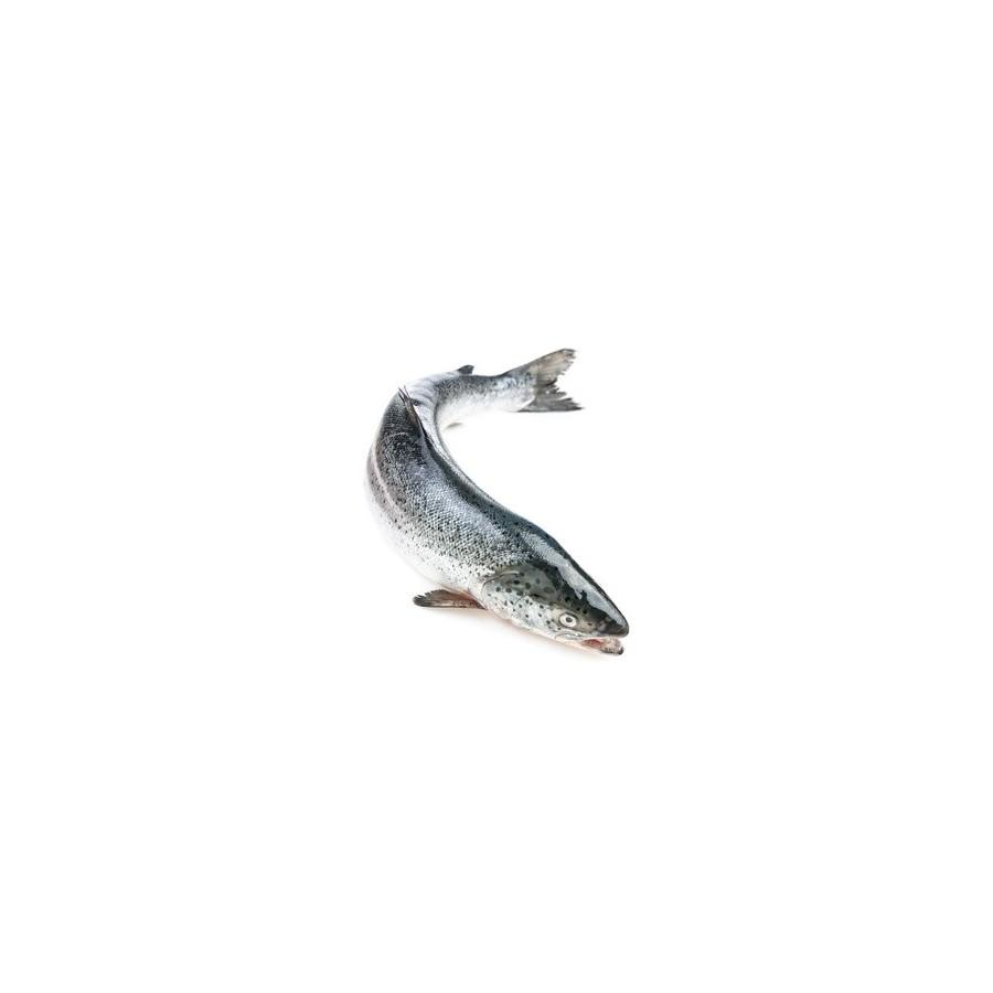 Saumon entier la pièce de 3 kg (Salmo salar)